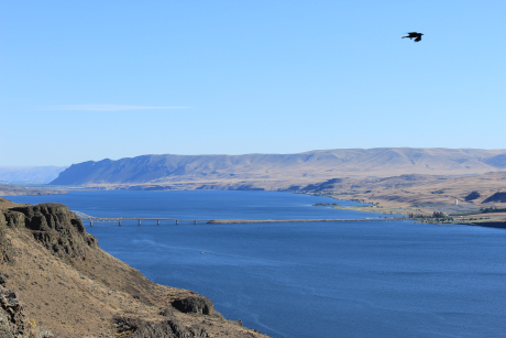The colorful photo shows the Columbia River with a boat in it and a bridge across it. Hills on each side with a bird soaring overhead.