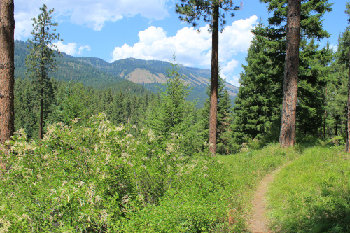 A colorful idyllic nature photo shows trees, a trail, and in the distance, tree-covered hills and blue cloudy sky