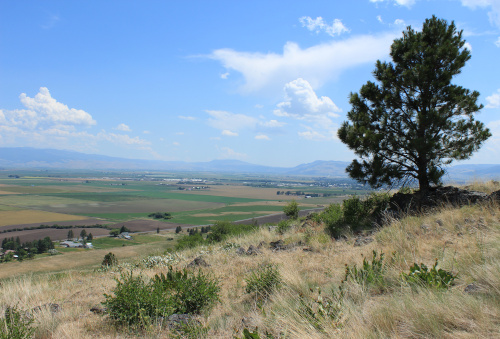 The colorful photo is taken from atop a hill with yellowed grass and green bushes. On this hill, a solitary green tree stands to the left. Below is the Grande Ronde valley with the different colored rectangles of agriculture. In the distance, blue mountains; above, blue sky and white clouds.