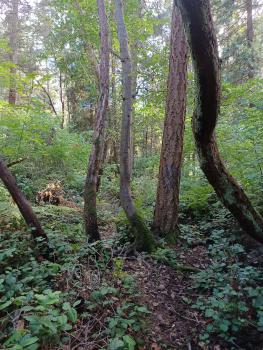 Trees, etc.